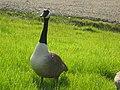 Geese 7.jpg