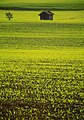 Germany - Green farm Around Starnberger See - panoramio.jpg