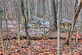 Gfp-missouri-weldon-springs-deer-in-the-winter-forest.jpg
