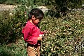 Gifford Pinchot National Forest, huckleberry picking-3 (36777733540).jpg