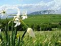 Giunchiglie - panoramio.jpg