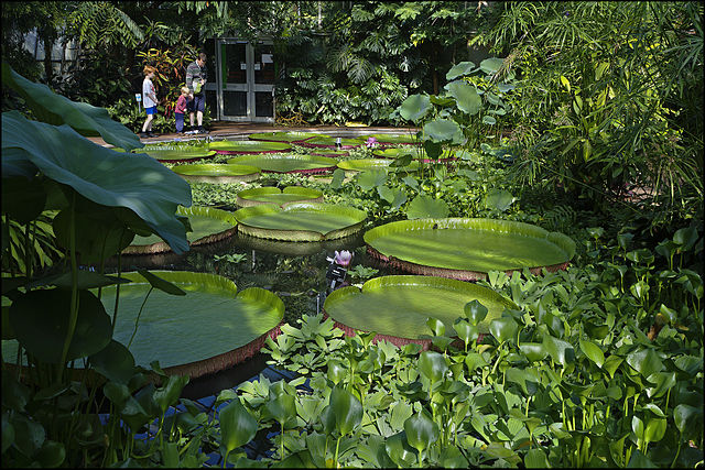 Real jard n bot nico de edimburgo parque y zoo en for Jardin botanico edimburgo