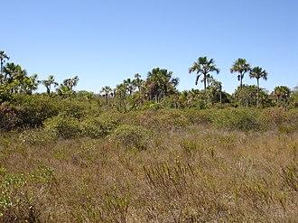 Indirect land use change impacts of biofuels - Brazilian cerrado.