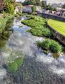 Grassy river (8180237068).jpg