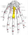 Gray220 - Third metacarpal bone.png