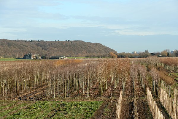The Grebbeberg seen from the south; the slopes facing the attackers in the east were more gradual (2005). Grebbeberg the Netherlands.jpg