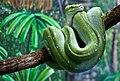 Green Snake at rest-1and (4622295817).jpg