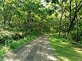 Green and calm path.jpg