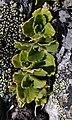 Green plant in France.jpg