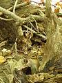 Griffy Woods - chipmunk - P1100473.JPG