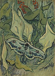 Vincent van Gogh: Giant Peacock Moth