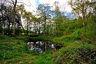 Groton Wood Suffolk Wildlife Trust nature reserve