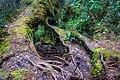 Gunung Irau (The Mossy Forest) (25582880723).jpg