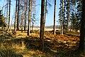 Hajnówka, Poland - panoramio (199).jpg