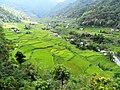 Hapao Rice Terraces (a).jpg