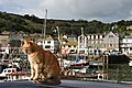 Harbour Cat - geograph.org.uk - 254954.jpg