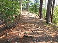 Hassocky Meadow Trail.JPG