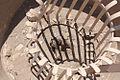 Hatshepsut-tree.jpg