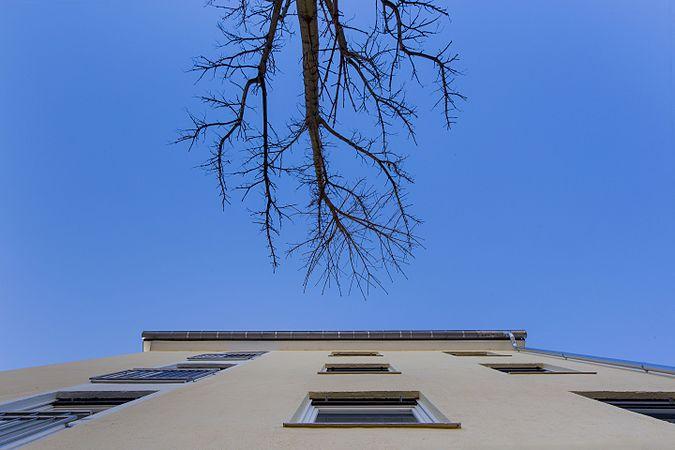 Haus-Südfassade mit Baum, 2017, Kössener Str. 13, München.jpg