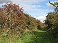 Hawthorn berries, Mugger's Loan - geograph.org.uk - 569400.jpg
