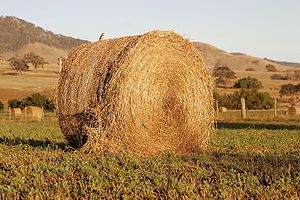 Hay Bale with bird