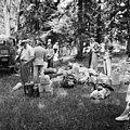 Helsingin olympialaiset 1952 - N210170 - hkm.HKMS000005-000001qo.jpg