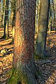 Hemlock Ridge Preserve (10) (13810459215).jpg