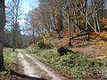 HerbstImOberenGoldersbachtal.JPG