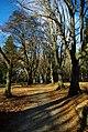 Herbst auf dem Ziegelberg - geo.hlipp.de - 7657.jpg