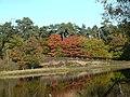 Herbstimpression Schwarzes Wasser.jpg