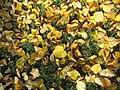 Herbstlaub - panoramio (15).jpg