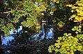 Herbststimmung beim 'Nymphenteich' am Zürichhorn 2012-10-19 17-40-49.JPG