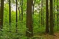 Herrnhut Naturschutzgebiet Hengstberg 03.jpg