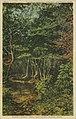Hidden Forest Trail (NBY 24484).jpg
