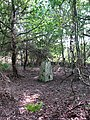 Hidden in the trees - geograph.org.uk - 971051.jpg