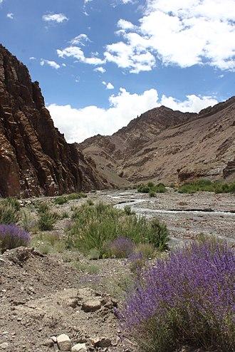 Hemis National Park - Image: Himalayan Lavender in Hemis National Park