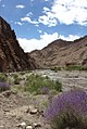 Himalayan Lavender in Hemis National Park.jpg