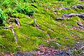 Himmelberg Tiebelquellen Moosboden 28062009 61.jpg