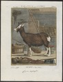 Hircus aegagrus - met lange hoeven - 1700-1880 - Print - Iconographia Zoologica - Special Collections University of Amsterdam - UBA01 IZ21300229.tif