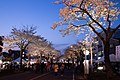 Hitachi Sakura Festival, Ibaraki 17.jpg