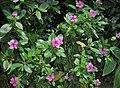 Home Grown Flowers 02.jpg