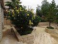 Home garden.jpg