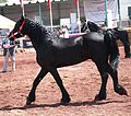 HorseTexcoco11.JPG