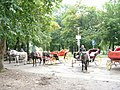 Horse carriage at Vrelo Bosne.JPG