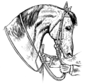 Horsemanship for Women 040.png