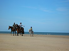 horse and rider on a sandy beach
