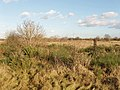 Hounslow Heath - geograph.org.uk - 108662.jpg