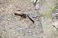 Hymenoptera (42594916270).jpg