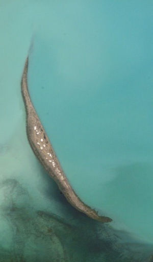 Korzhin Island - NASA picture of Korzhin Island.