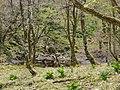 Ibarakawacho, Higashiomi, Shiga Prefecture 527-0216, Japan - panoramio (2).jpg